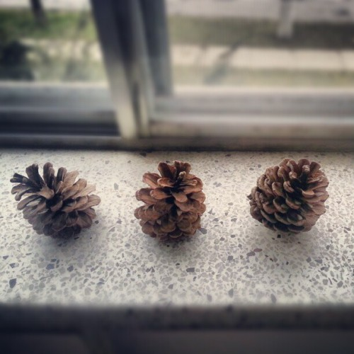 little pinecones on the ledge