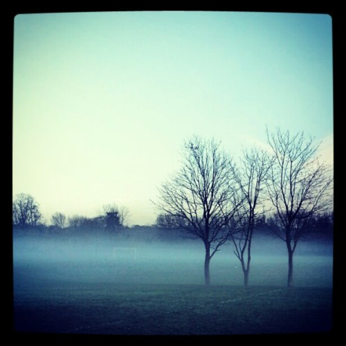 Misty #mist #fog #trees #park #nature