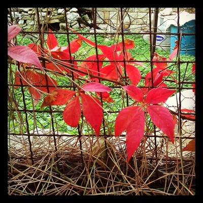 Breaking the grid #grid #red #leaves #nature