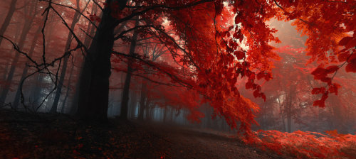 lavender-valley:  -Sacred shivers- by *Janek-Sedlar