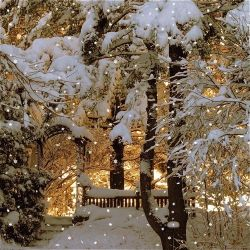 youngbeautifulchaos:  winter wonderland.