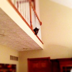 Kitty likes chillin on the edge #cat #kitty #chillin