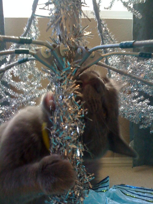 please don't eat the plastic Christmas tree! oh, i see you already are..