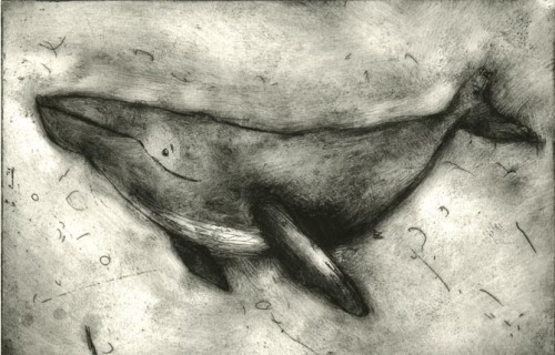 fayebradley:  A whale etching I created when experimenting in the print room.