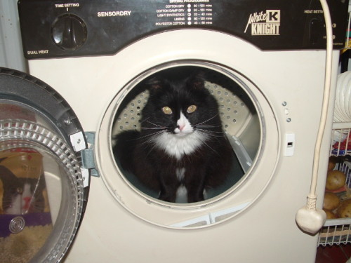 get out of there cat. you are not an astronaut and that is not a spaceship. it is a dryer and you still don't belong there.
