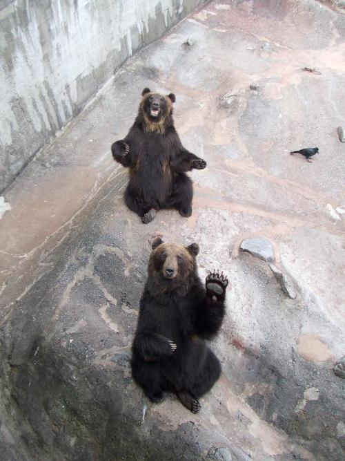 fuckyeahcuteanimalss:  (via 20 LOL Animals (11.24.12) | Pleated-Jeans.com)