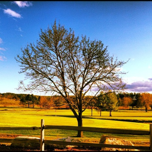 Pretty sunshine #nature #tree #autumn #fall #derry (at Hoodkroft Country Club)
