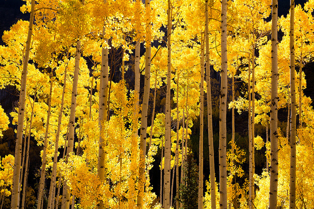 Aspen Blaze by dirkoneill on Flickr.