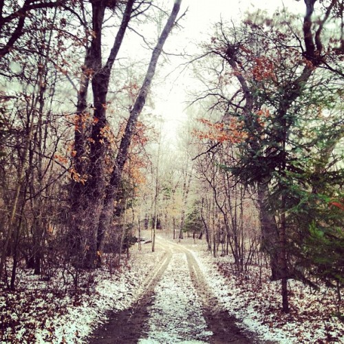 Snow at the cabin. ❄🍂#snow #road #trees