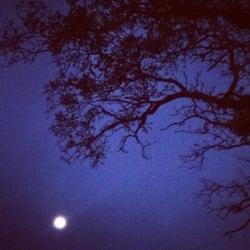 Spooky… not. #moon #tree #blue #branch #noon #night #spooky #black