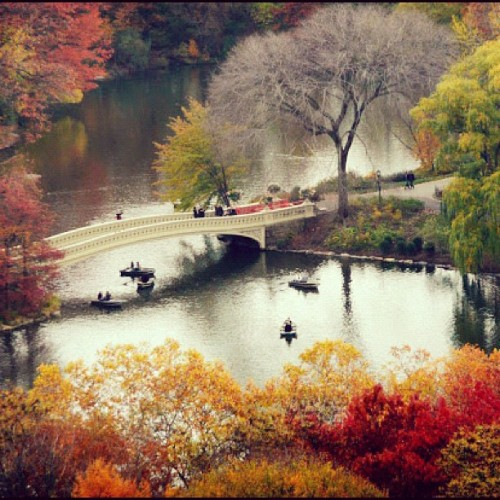centralparkny:  Boating in Central Park takes on a whole new wonder when the autumn foliage is at peak #centralpark #autumn #boating #nyc #newyork #newyorkcity #nature #outdoors #landscape #park