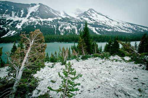 paramoreloves:  Lake Josephine - Glacier National Park by LongRoad15 on Flickr.