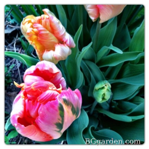 #spring … Love to share on #gardenchat