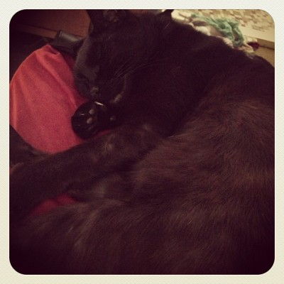 Sleepy kitty is sleepy. #cat #catsofinstagram #lizzyfest2012