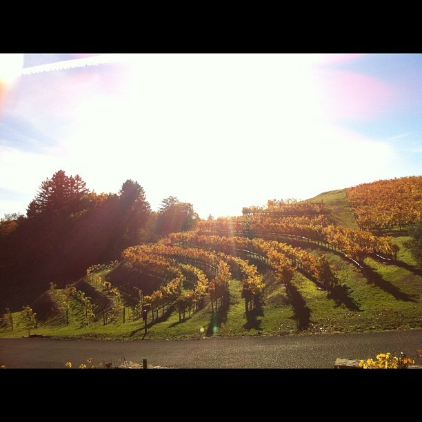 11.24.12 cruising around Spring Mountain #winery #nofilter #sunnyday #bliss