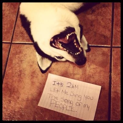 dogshaming:  Song of My people  Aelita the husky finds its lovely to show my whole family and I the song of her people at 2am  View Post shared via WordPress.com