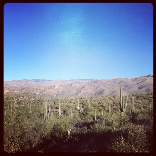 Hello Arizona! #hiking #desert #cactus #nature (at Douglas Springs Trailhead)