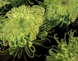 Chrysantemums by Heather Maunders