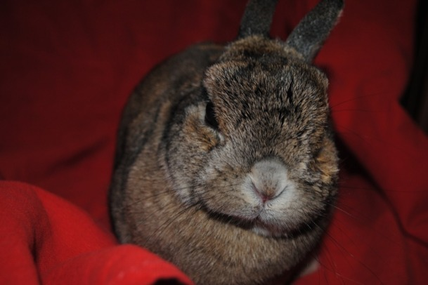 dailybunny:  Bunny Wants to Know Where Those Bananas You Promised Are Happy Bunday! Thanks, Kayla!