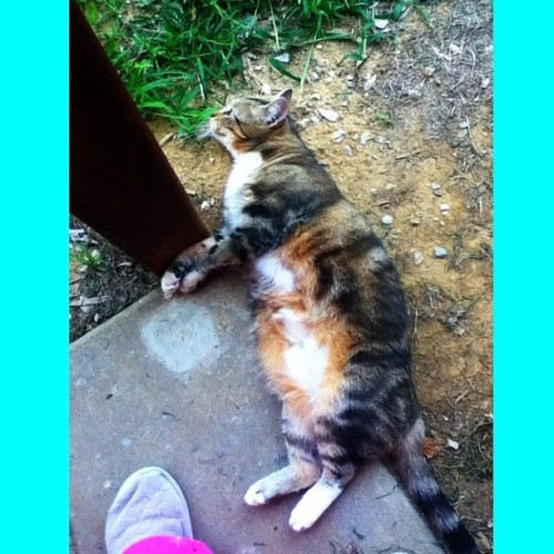 She likes rolling around in the dirt. Dirty CaLusa. #cat #neko #gato #pet #catstagram #instacat #meowstagram #instameow #petstagram #instapet #catmancing #catsofinstagram #instagram #instagramhub #instagood #instamood #instacool #instadaily #igdaily #photography #ipodography #photooftheday #goodmorning #squaready #cameraplus
