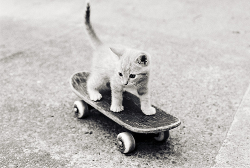 livegoeson113:  Awe kitty can skateboard, skateboarding kitty so cute. Haha