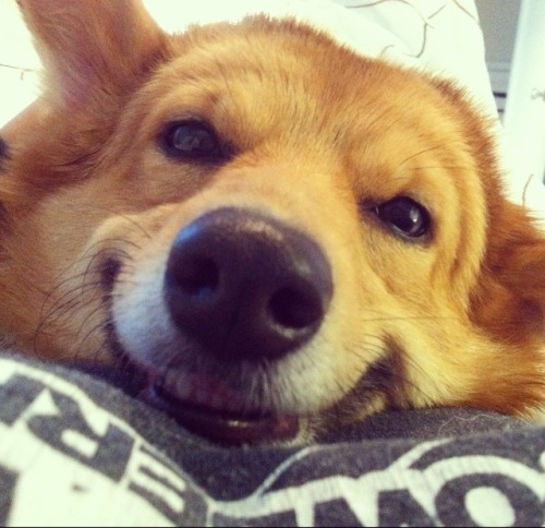 corgiaddict:  SMILE!