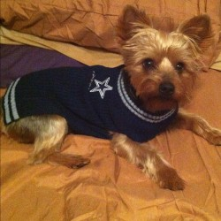 LOOK AT JOJO WIT HIS NEW SWEATER!!! COWBOYS!!!