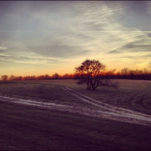 #fmsphotoaday November, Day 27: Tree #tree #sky #sunset #nature #autumn #fall #silhouette #road #path #field