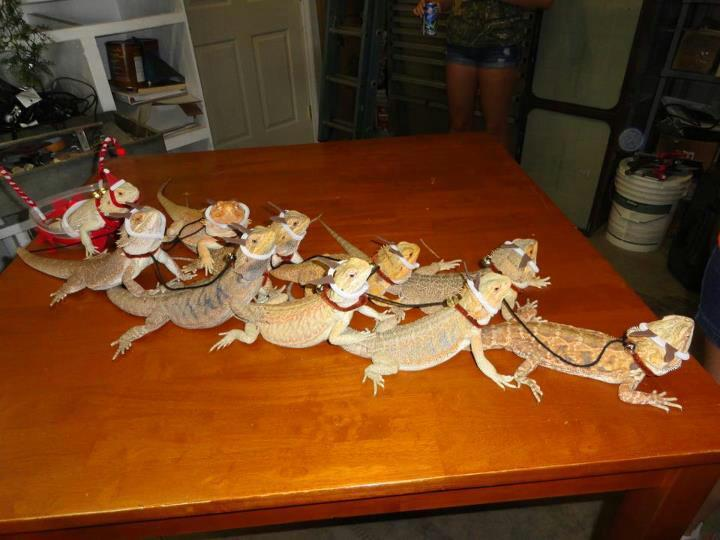 shitshilarious:  at what point do you realize you have too many lizards