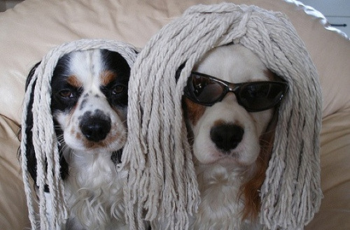 crittercostumes:  Trying to be a Puli is hard. I think these pooches are going to need a few more mops.  Animals with mops and cool on their heads.