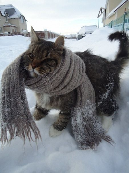 getoutoftherecat:  petapeta:  ZsaZsa Bellagio  but baby it's cold outside