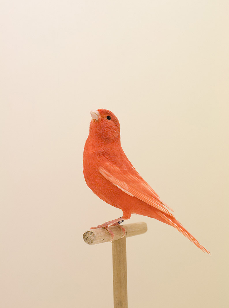 Luke Stephenson - The Incomplete Dictionary of Show Birds (2012)