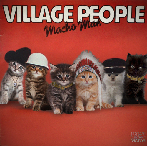 Village Kittens - Macho Cat