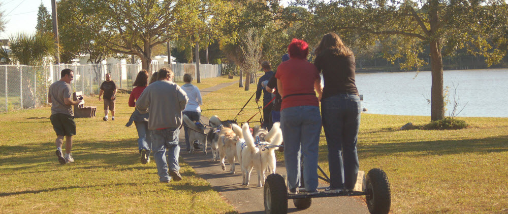 Annual Sled Dog Turkey Trot - Sandy Paws Sled Dog Club Of Tampa Bay