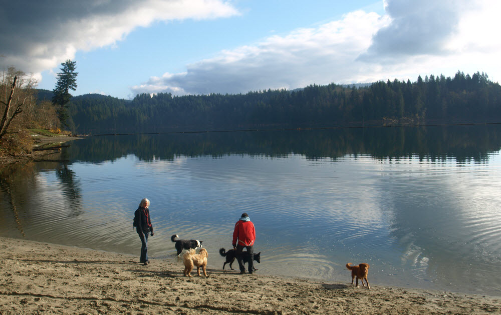 Hayward Lake Railway Trail - Off Leash Dog Parks and Trail Hiking Group