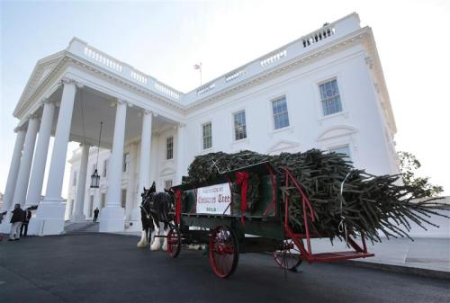 reuterspolitics:  The White House Christmas Tree, a 19-foot Fraser Fir from Jefferson, North Carolina is delivered by horse drawn-carriage in Washington on November 23, 2012. REUTERS/Yuri Gripas