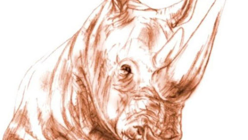 Fossil reveals rhino 'cooked to death' 9 million years agoAn analysis of the volcanic rock-preserved skull suggests the animal's grisly death was near instantaneous during a Vesuvius-like eruption.