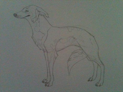 Doodle of a long haired whippet. Love these dogs, so beautiful.