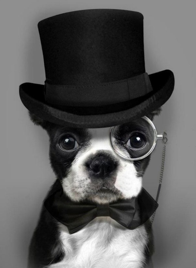 funnyordie:  Sophisticated Dog is Sophisticated