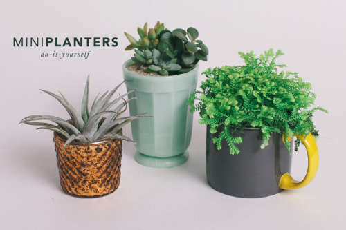 chaplinnn:  Mini Penny Blog // DIY Mini Planters