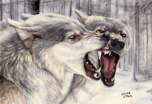 Snarly wolves. Wolves by *ManiaAdun