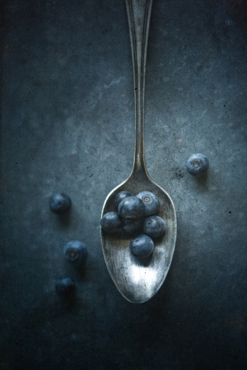 dansmonlivre:  Blueberries by Mark Boughton