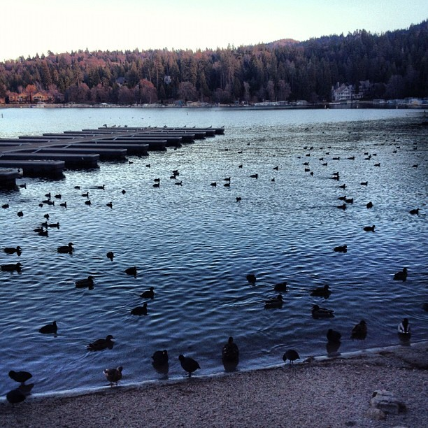 Ducks on the lake… I'm so in love with it up here. #lakearrowhead we are staying the night to wait for phone & Internet service installation tomorrow. Eek!
