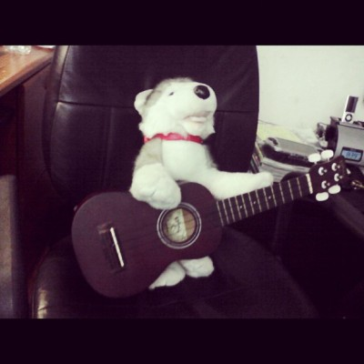 I have a musically talented stuffed animal named cheesecake :3 #cheesecake #buildabear #ukelele #uke #talented #stuffedanimal #dog