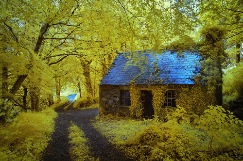 Ancient Forest Cottage, Stradbally, Ireland photo via lily