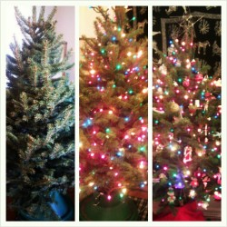 Before, during, after. #christmastree #holidaydecorating #festive
