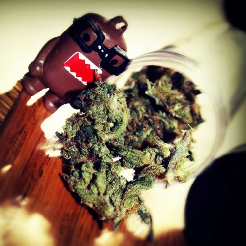 #Domo fux wit that #loud. 😉💨 #weed #marijuana #cute #bud #nerddomo #love #high #sticky #perf #Canon #bby #vile #mine #macro