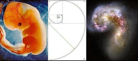 Fibonacci is beautiful.