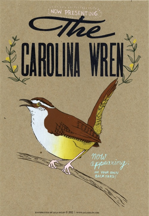 Carolina Wren. letterpress and screen printing. 2012