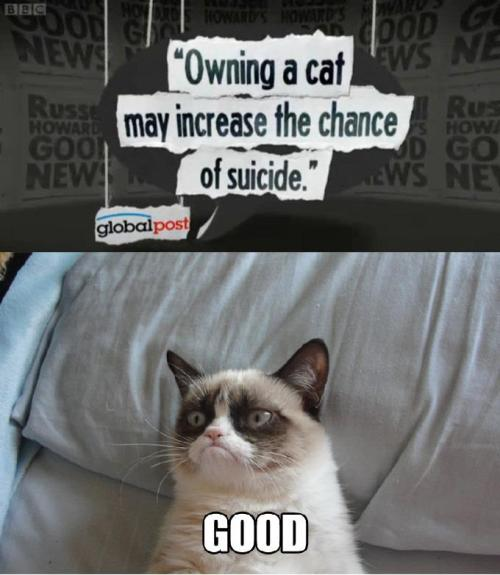Love this cats face.  Also, accurate depiction of cat attitude I feel. Ps Cant believe this cats name is tartar sauce